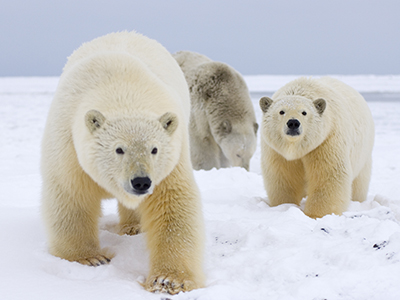 Keep Oil and Gas Leasing Out of America's Arctic | World Wildlife Fund