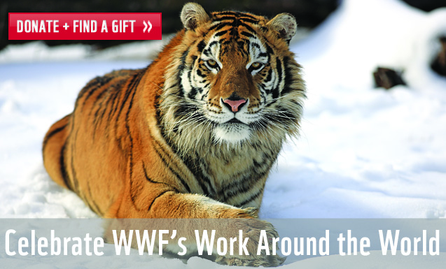 Celebrate WWF's Work Around the World