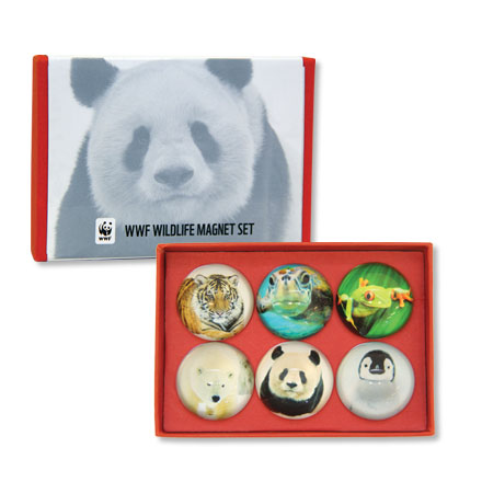 Boxed set of six dome-shaped animal magnets