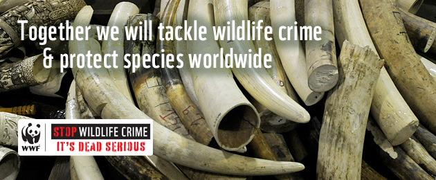 Together we will tackle wildife crime and protect species worldwide