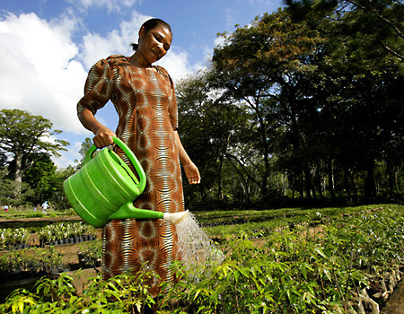 Woman watering at a tree nursery