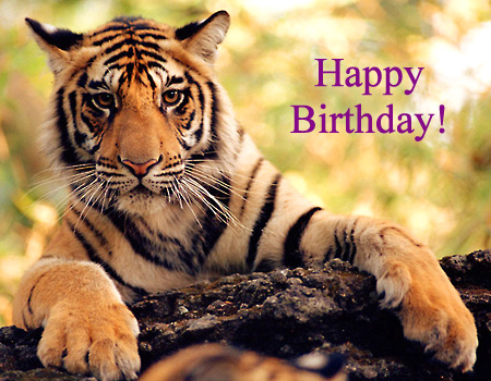 Tiger birthday ecard