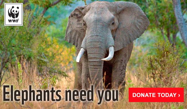 Elephants need you