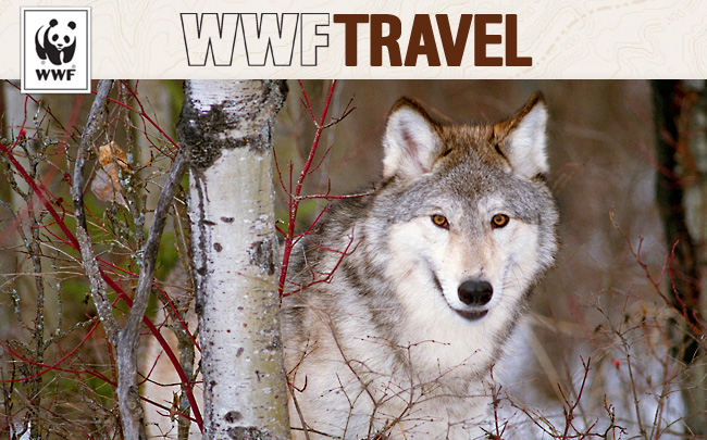 Wolf - WWF Travel E-newsletter