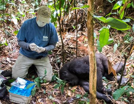 WWF Staff and gorilla