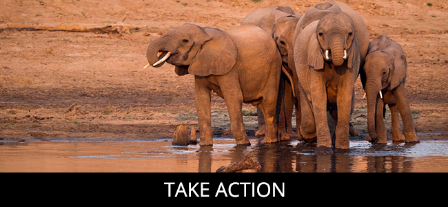 elephants | take action