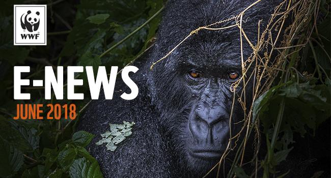 WWF E-news | gorilla