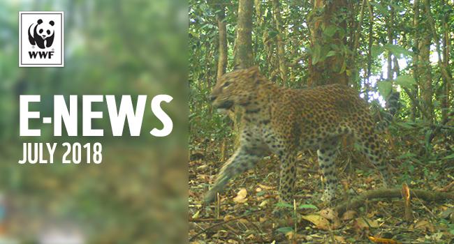 WWF E-news | leopard