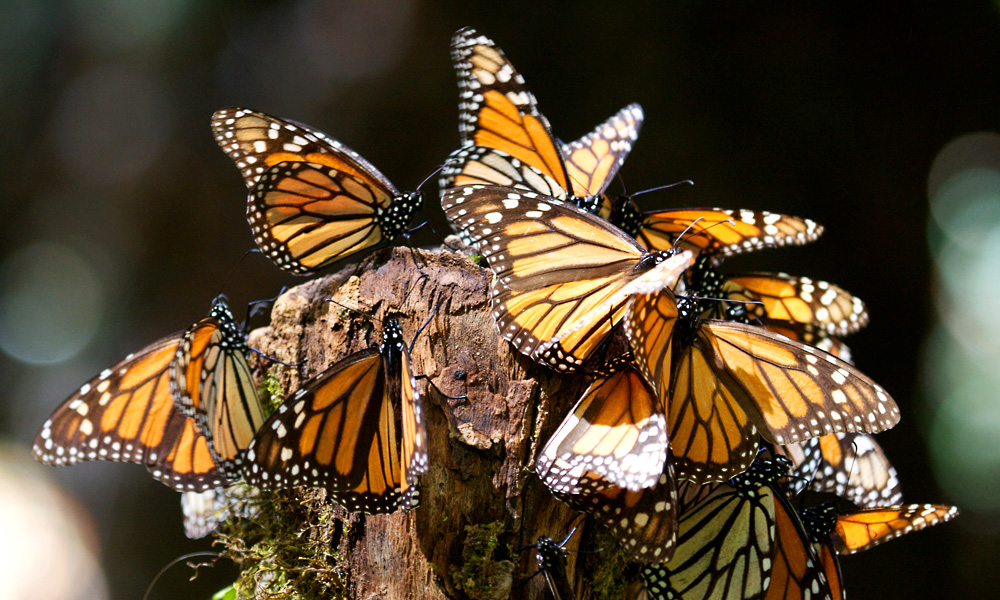 WWF Monarch Butterfly Adventure Giveaway