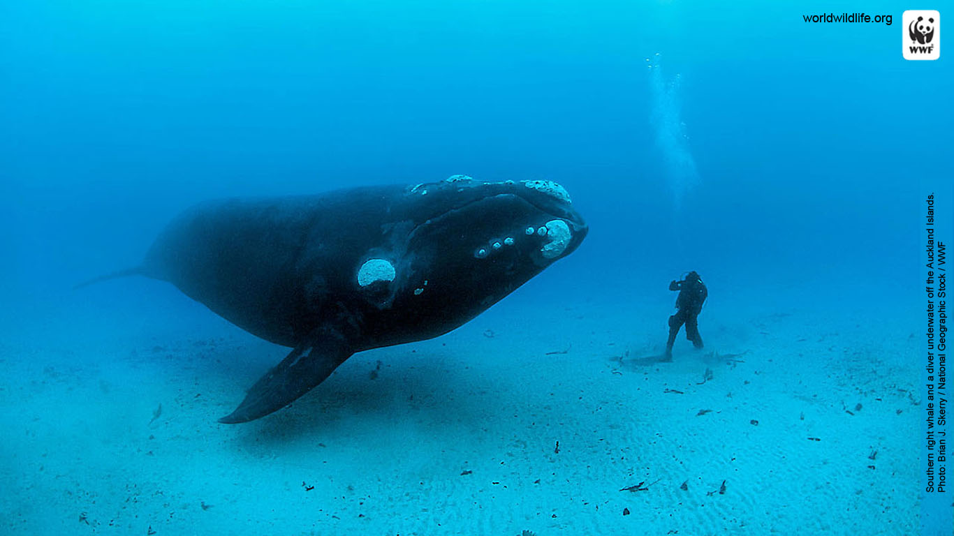 1000+ images about WWF marine pictures on Pinterest ...