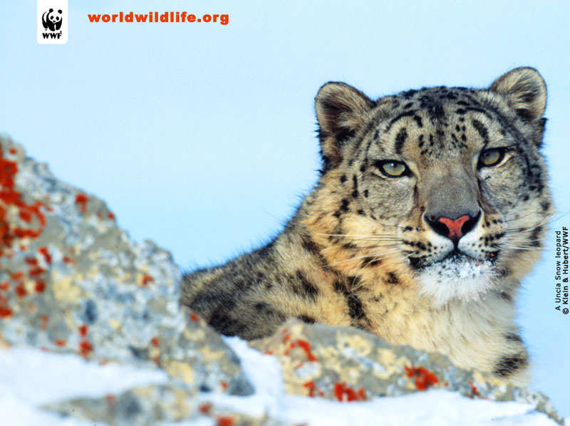 wildlife wallpaper. Wildlife Wallpapers,