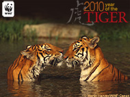 Year of the Tiger Ecard