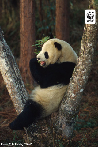 World Wildlife Fund Wallpaper