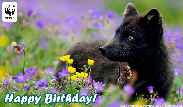 Birthday ecard fox
