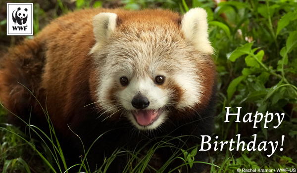 birthday ecards from wwf  free birthday ecards  world wildlife fund, Birthday card