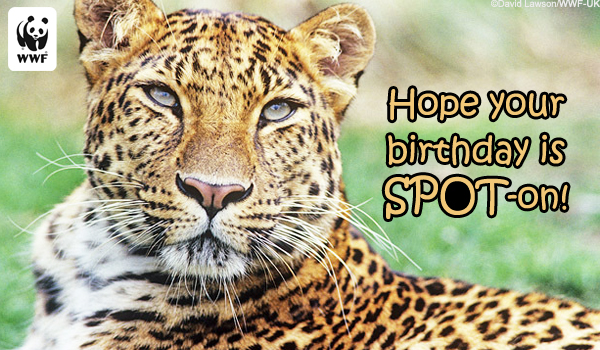 Birthday Ecards from WWF Free Birthday Ecards – Send E Birthday Card