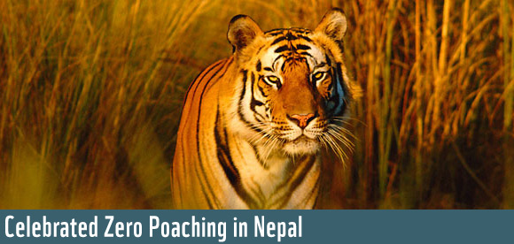 Celebrated Zero Poaching in Nepal