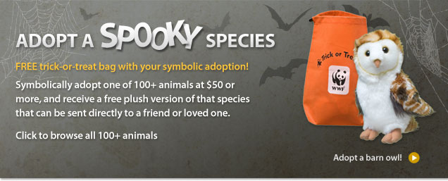 Halloween Gift Adoption Header Splash