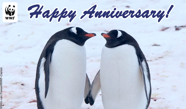 Occasion Ecard Anniversary Penguins