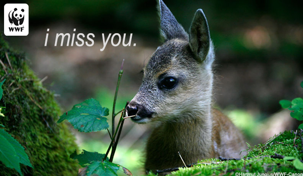 Occasion Ecard Miss You Deer