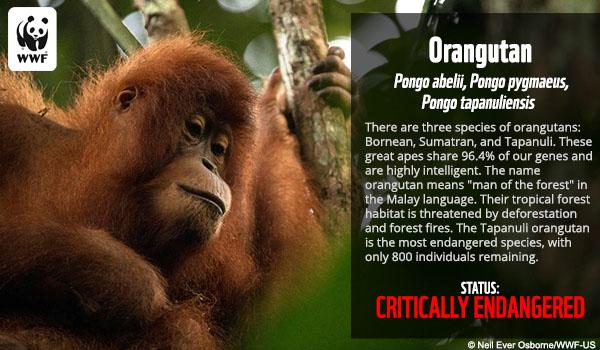 Species Fact Ecards | World Wildlife Fund