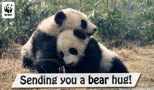 eHug Ecard Panda