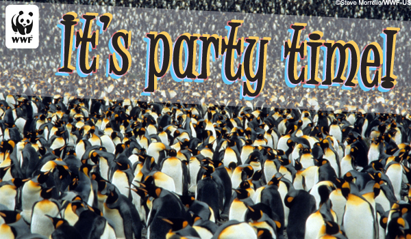 Invite Ecard Penguins