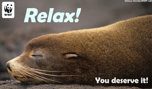 Occasion Ecard relax seal