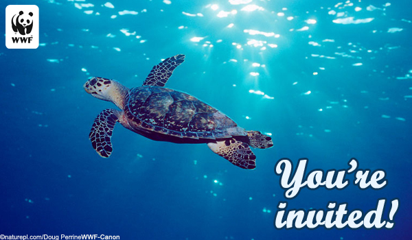 Invite Ecard Sea Turtle