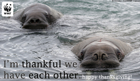 thanksgiving_thankfulwalrus_smallecard