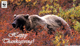 Thanksgiving Ecard - Bear