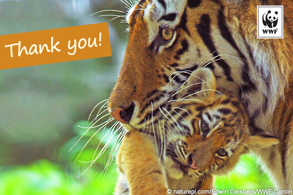 Thank a Ranger postcard tiger2