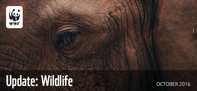 WWF Update: Wildlife