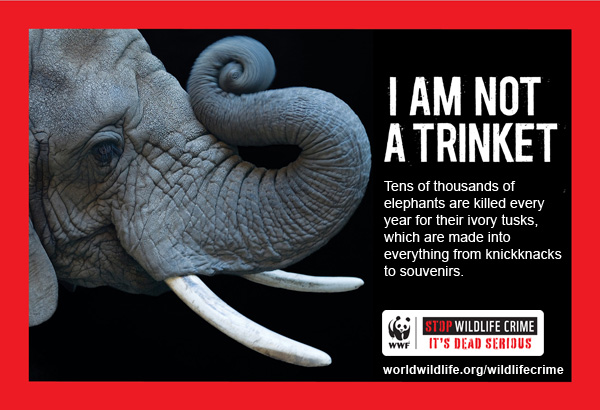 Wildlife Crime PSA Elephant