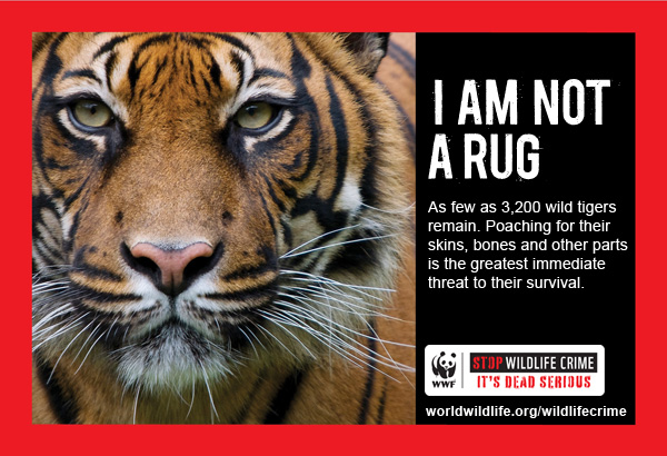 Wildlife Crime PSA Tiger