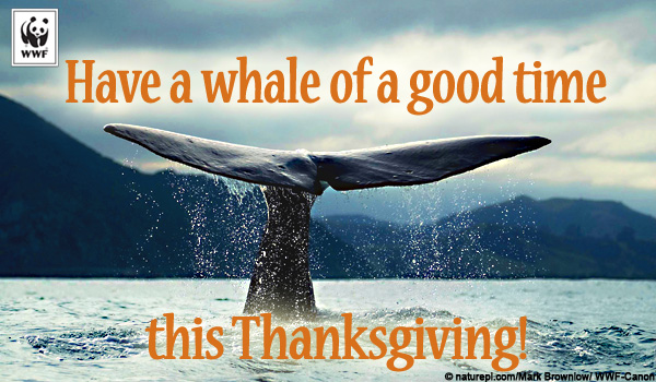 Thanksgiving Ecard - Blue Whale