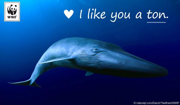 Blue whale ecard