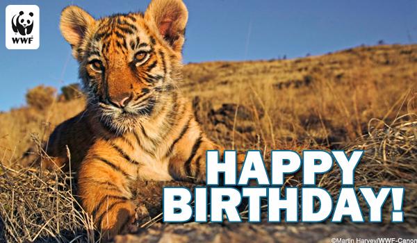 Tiger Birthday Card Images Free Birthday Card Design