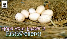 eggs_easter-sm.jpg
