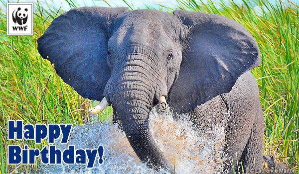 birthday donation ecard elephants