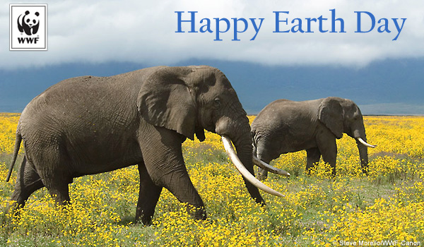 Earth Day Ecard Elephants