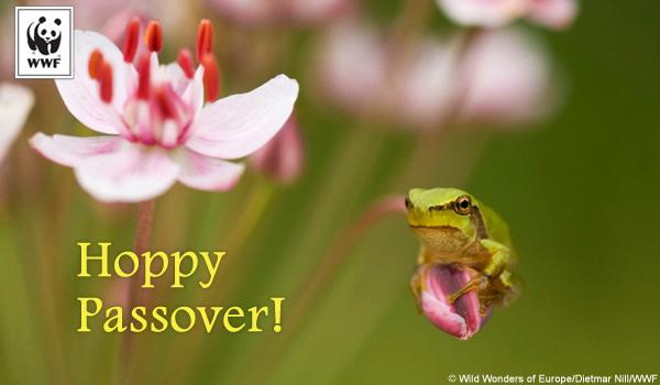 frog_passover-sm.jpg