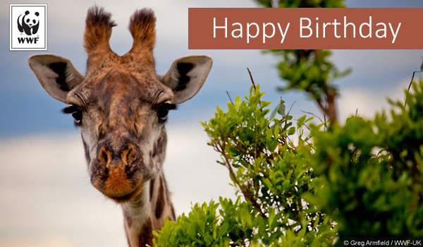 http://wwf.worldwildlife.org/images/content/pagebuilder/giraffe_birthday_donationecard-m.jpg