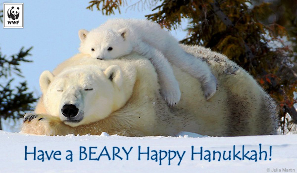 holiday beary hanukkah ecard