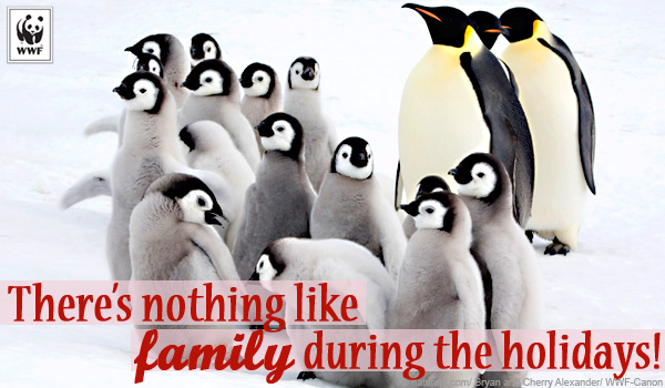 holiday penguin ecard