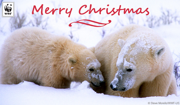 Holiday ecard polar bear