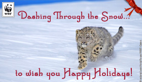 holiday_snowleopard_ecard_small