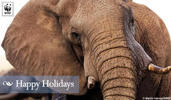 holiday donation ecard elephant