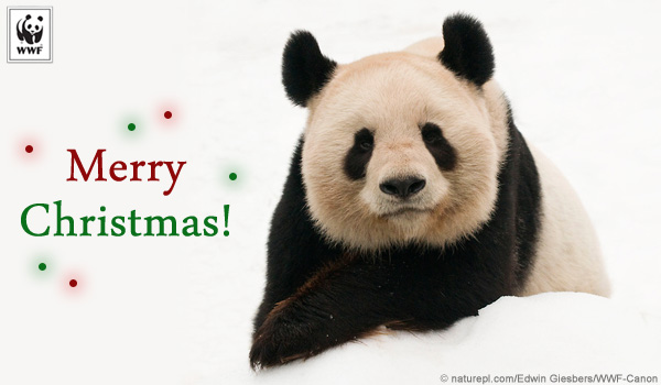 holiday donation ecard panda