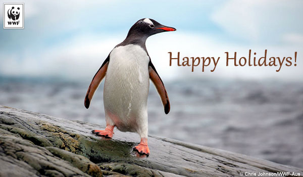 holiday donation ecard penguin